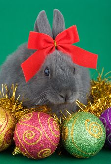 Grey Bunny And Christmas Decorations Stock Photo