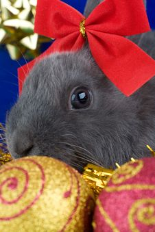 Grey Bunny And Christmas Decorations Stock Photography