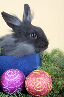 Free Grey Bunny And Christmas Decorations Stock Photo - 3848540