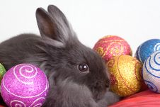 Free Grey Bunny And Christmas Decorations Stock Photo - 3848640