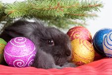 Bunny Under The Christmas Tree Royalty Free Stock Photography