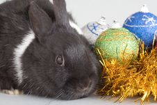 Free Bunny And Christmas Decorations Stock Photo - 3848720