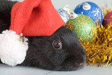 Free Bunny And Christmas Decorations Stock Images - 3848744