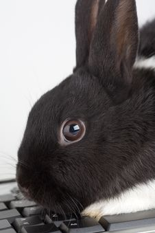 Free Black And White Bunny On The Keyboard Stock Photography - 3848782
