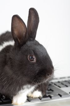 Free Black And White Bunny On The Keyboard Stock Photos - 3848793