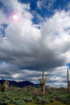 Free Saguaro Cactus Stock Image - 3849951