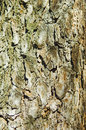 Free Pine Bark Stock Photo - 3852800