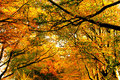 Free Autumn Sky Stock Images - 3853864