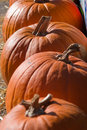 Free Pumpkins Royalty Free Stock Images - 3859739
