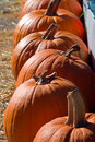 Free Pumpkins Stock Images - 3859974