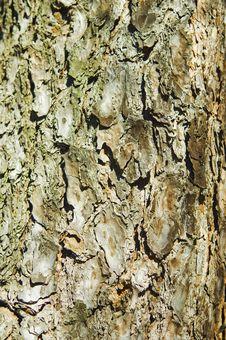 Free Pine Bark Stock Photo - 3852800