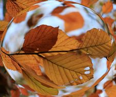 Autumn Bubble Stock Photo