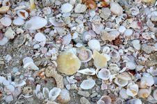 Free Sea Shells On Beach Near Dubai, UAE Stock Photography - 3852902