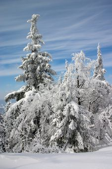 Free Winter Landscape Royalty Free Stock Photography - 3853087