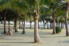 Free Coconut Trees Stock Image - 3855561