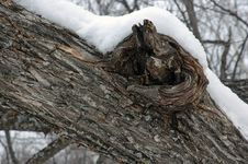 Free Old Tree. Stock Photo - 3856870