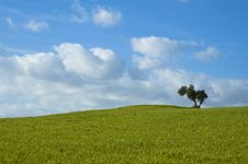 Free Green Field With Tree Royalty Free Stock Image - 3858156