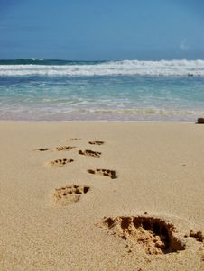 Free Footprints In The Sand Stock Images - 38538314