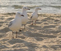 Free The Three Amigos Stock Photo - 3867780