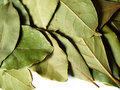 Free Bay Leaves Royalty Free Stock Photo - 3868105