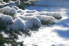 Free Winter Branch Stock Photo - 3860210