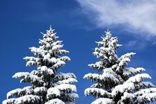 Free Snow Covered Trees Stock Photography - 3860552