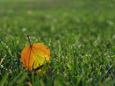 Free Fallen Leaf Royalty Free Stock Images - 3860829