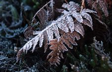 Free Frost Stock Image - 3861241