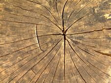 Free Wood Royalty Free Stock Image - 3861876