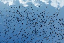 Free Birds In The Sky. Stock Photos - 3864883