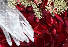 Free Wedding Petals Stock Photo - 3865010
