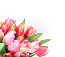 Free Bunch Of Tulips Royalty Free Stock Photography - 3865737