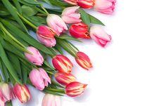 Free Bunch Of Tulips Stock Image - 3865781
