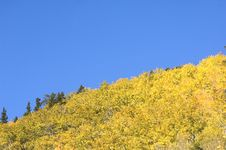 Free Aspen Trees And Hillside Royalty Free Stock Image - 3865916