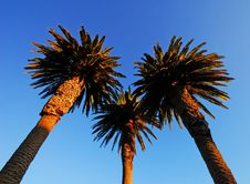 Free Palm Trees And Blue Sky Stock Photo - 3866330