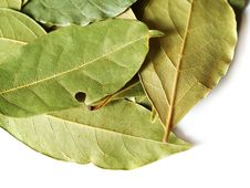Free Dry Bay Leaves Stock Photo - 3868200