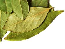 Free Green Dry Bay Leaves Stock Photos - 3868213