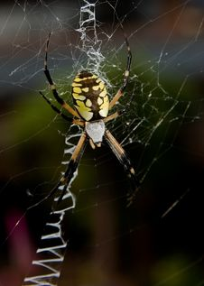 Free Spider Stock Image - 3869391