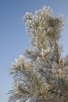 Free A Part Of Snow Tree Under The Blue Sky Royalty Free Stock Photos - 3869578