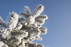 Free A Part Of Snow Tree Under The Blue Sky Royalty Free Stock Images - 3869639