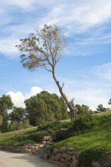 Free Tree Stock Photo - 3869670