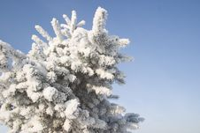 A Part Of Snow Tree Under The Blue Sky Stock Images