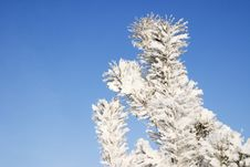 A Part Of Snow Tree Under The Blue Sky Stock Photos