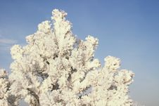 A Part Of Snow Tree Under The Blue Sky Royalty Free Stock Photo