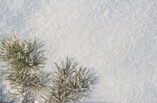 Free A Part Of Snow Tree Royalty Free Stock Image - 3869766