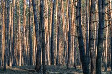 Free Forest Stock Photography - 38666132