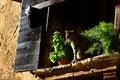 Free Cat Taking Sun On The Window Royalty Free Stock Photo - 3877385