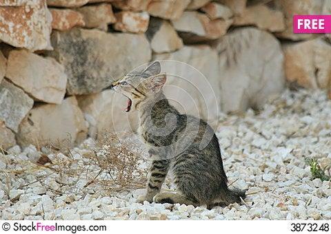 Free Kitten Royalty Free Stock Photos - 3873248