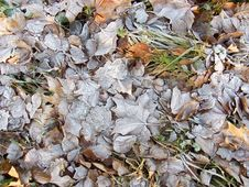 Free Leaves Covered In Frost Stock Images - 3870244