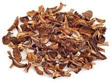 Free Dried Mushrooms Stock Photos - 3870863